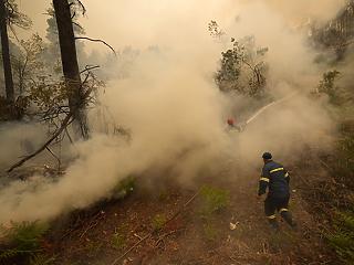 Klímakrízis-minisztériumot hozott létre Görögország a pusztító erdőtüzek miatt