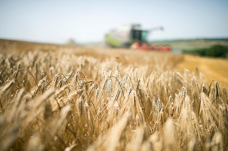 Még van hová drágulnia a szántóknak, nagy a lemaradás a nyugat-európai átlagtól (fotó: MTI)