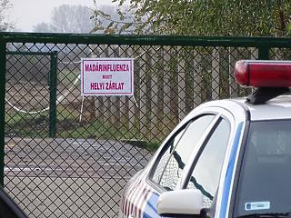 Újra megjelent a madárinfluenza Magyarországon - már ölik a pulykákat