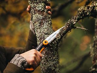 Hasznos tippek a kerti fák ültetéséhez és gondozásához