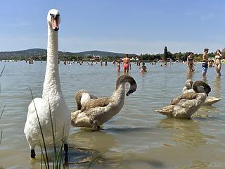 Balaton helyett a Velencei-tónál vennél nyaralót? Ennyiért találsz