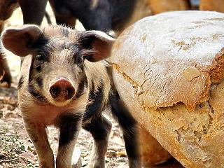 Brutális drágulás a boltokban - ennyivel emelkedhet a kenyér és a hús ára?