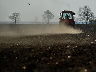 200 ezer hektárral kisebb területen vetettek a gazdák tavasszal