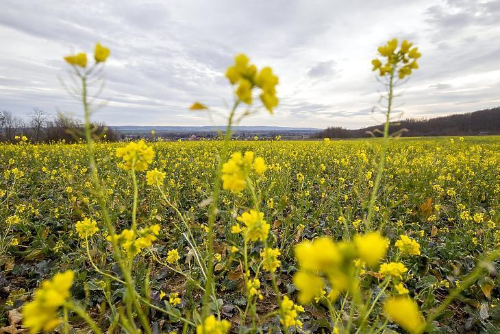 A mezőgazdaság is megjelent a BÉT-en (fotó: MTI)