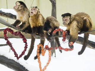 Az Opus fejleszti a győri állatkertet