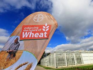 Rábólintottak: csak beadja a derekát a Monsanto?