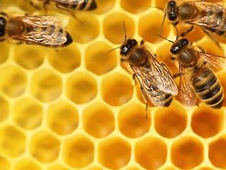 Globális probléma a méhek pusztulása