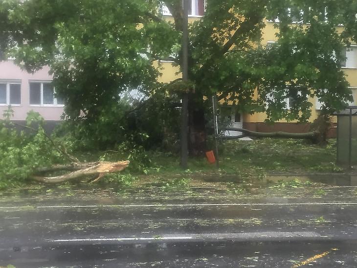 Vihar tépázta fa (Fotó: Székely Sarolta/mfor.hu)