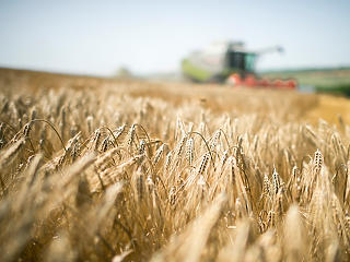 Megmaradt a beruházási kedv a mezőgazdaságban