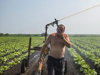 Jól húz a magyar agrárgazdaság