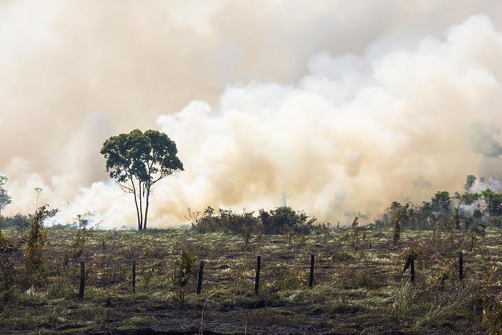 Lángoló erdő az Amazonas-medencében. Illusztráció. (Forrás: Depositphotos)