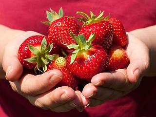Röhejes bérek miatt rohad a földeken a magyar gyümölcs