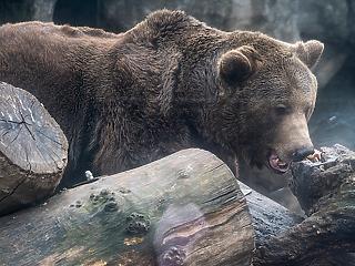 A nap képe: vajon mit látott ez a medve?