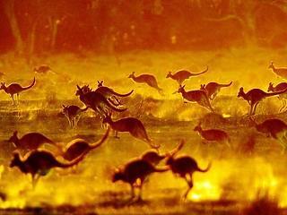 Öt év alatt 300 millió eurót fordít klímavédelemre Ausztrália