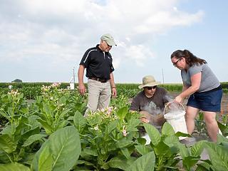 Genetikai áttörés: forradalom jön a mezőgazdaságban