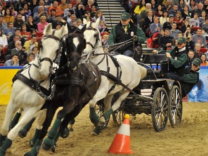 Megbokrosodott lovak miatt többen megsérültek a fogathajtó versenyen