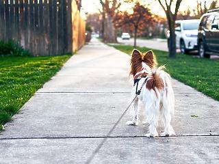 Jó hír a kutyatulajoknak: este 8 után is lehet sétáltatni az ebet