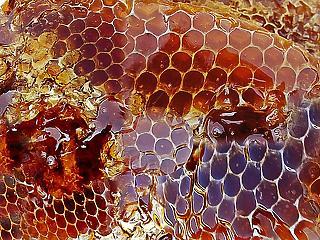Forradalmi ötlettel állt elő a miniszter: így védenék meg a magyar mézet