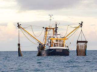A kínai halászflotta félkatonai szervezetként működik a világ tengerein