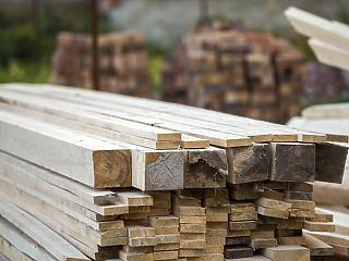 Minden szinten hiány van fából